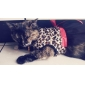 Leopard Printing Chiffon Evening Dresses with Big Bowknot for Dogs Cats
