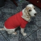 Dog Shirt / T-Shirt Red / Orange / Yellow / Green / Blue / Pink Dog Clothes Summer Solid