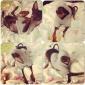 Коты / Собаки Толстовки Красный / серый Одежда для собак Зима / Весна/осень Буквы и цифры Милые / Спорт