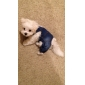 Dog Pants / Jeans Blue Spring/Fall Jeans
