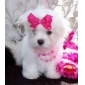 Собаки Ботинки и сапоги Ковбой / Мода Весна/осень камуфляж Розовый Полиуретановая кожа