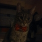 Cat / Dog Collar Adjustable/Retractable / Bow Tie Red / Green / Blue / Yellow / Rose / Navy Textile