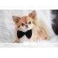 elegante collana regolabile papillon collare per cani (colori casuali)