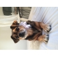 Spot Pattern Tulle Style Adjustable Bow Tie for Dogs Cats