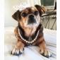 Ожерелья для Собаки Белый Весна/осень Пластик