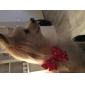 Heart Pattern Tulle Style Tiny Adjustable Bow Tie for Dogs Cats