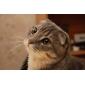 Diffusore flash per Nikon D700 D7000 D90 D300 D3000, Canon 7D 5DII 60D 600D