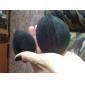 Принцесса Стиль Аксессуары для волос Повысить устройства Bulkness Губка волос чайник