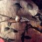 European and American vintage diamond wings of love leaves sweater chain N104Imitation Diamond Birthstone