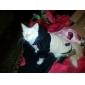 Собаки Плащи / Толстовки Бежевый Одежда для собак Зима Классика