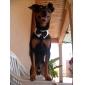 강아지 매다/보타이 강아지 의류 웨딩 블랙