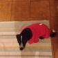 Собаки Футболка Красный Лиловый Одежда для собак Зима Весна/осень Однотонный На каждый день